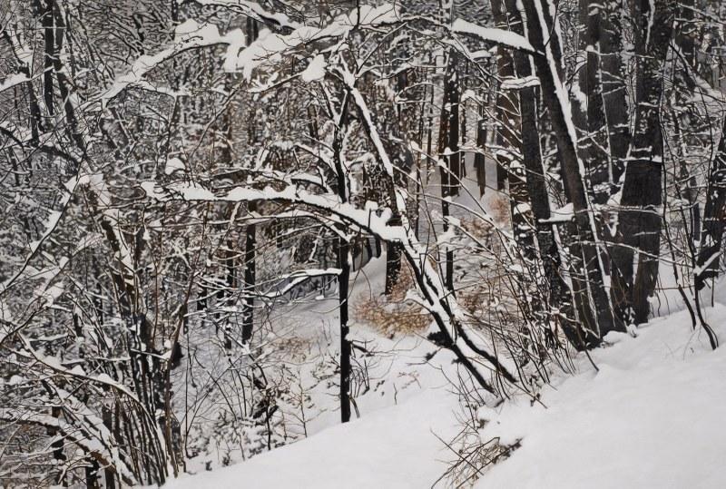 Winter.jpg/@@images/image/large